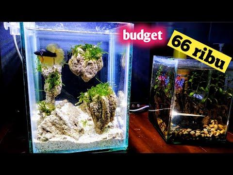 Modif Aquarium Ikan Cupang Youtube