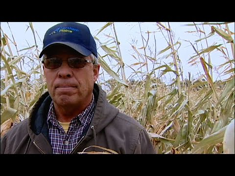Growing a Cover Crop for a Cash Crop