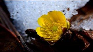信州の里山にも花の季節が・4K撮影