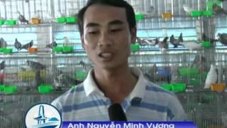 Video | TRAI BO CAU PHAP ABC | TRAI BO CAU PHAP ABC