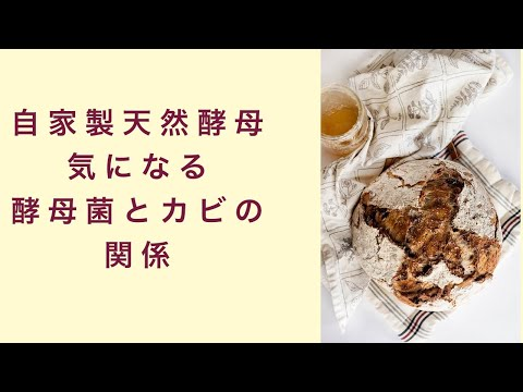 【自家製天然酵母】酵母作りで気になる酵母菌とカビの関係とは フルーツ酵母 自家製天然酵母 パン教室 教室開業 大阪 奈良 東京 福岡 名古屋