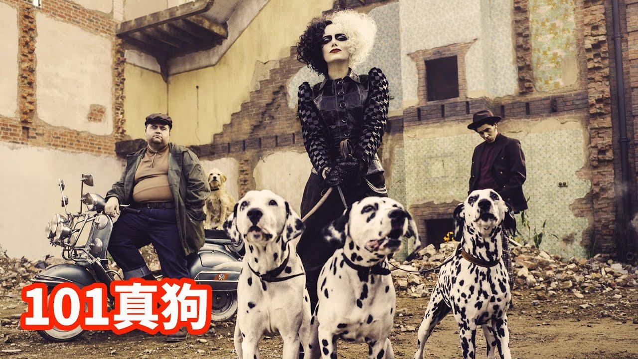 魔女为做一件斑点大衣,需要101只小斑点狗,最后却没命穿上!