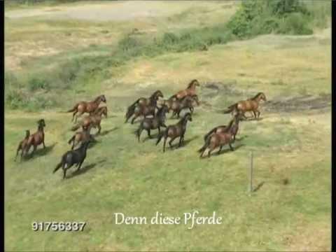 Wildpferde Ein Leben In Freiheit Wie Lange Noch Youtube