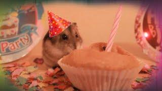 Hamster hat Geburtstag! Hamster birthday!