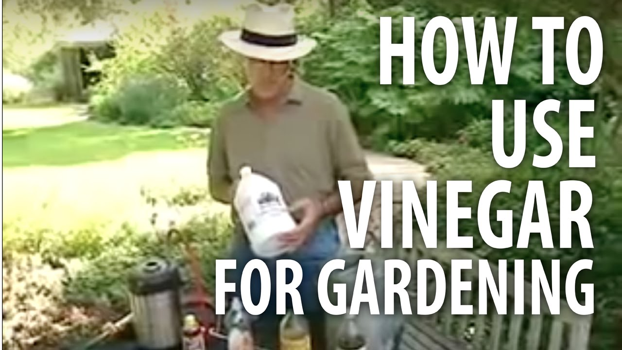 How To Use Vinegar For Gardening The Dirt Doctor