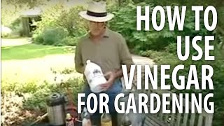 How To Use Vinegar For Gardening - The Dirt Doctor