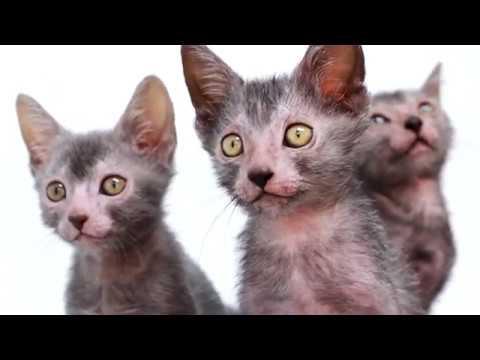 JC Floyd - Just In Time for Halloween, Werewolf Kittens