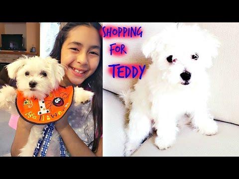shopping-for-teddy-cute-funny-maltesepuppy-|-b2cutecupcakes