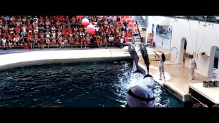 Bulgaria || Dolphinarium Varna