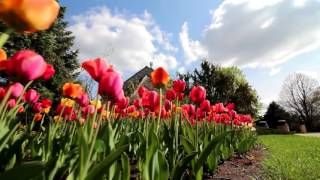 Video Beautiful Campus of Gustavus Adolphus College download MP3, 3GP, MP4, WEBM, AVI, FLV Juni 2018