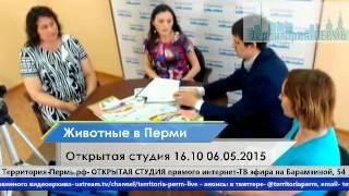 Защита животных в Перми- Открытая студия 16.10 06.05.2015