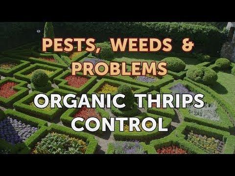 Organic Thrips Control