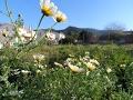 Ромашка ромашка цветок полевой красивая музыка цветов природа Испании mp3