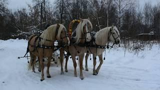 тройка солнечных лошадей
