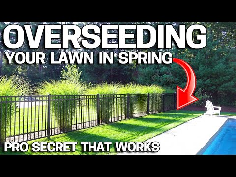 how-to-overseed-an-ugly-lawn-in-spring