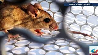 Juez ordena aislamiento en poblado de Argentina por brote de hantavirus