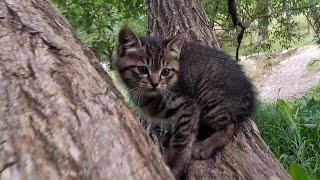 木登りしていた子猫を撮っていたら母猫が飛んできて。。 thumbnail