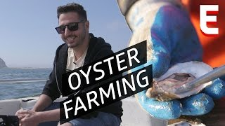 What Does It Take to Raise A Perfect Oyster? — Shokunin