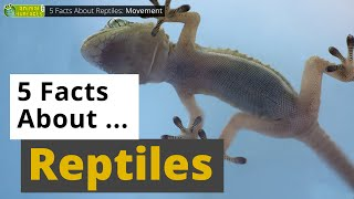 All About Reptiles - 5 Interes…