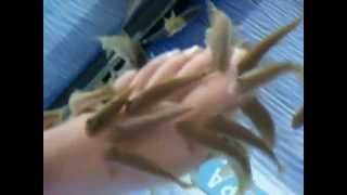 Fish Spa Therapy in Varna (Bulgaria)