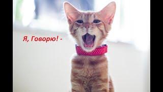 Говорящие коты Сборник 10