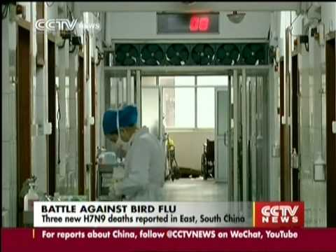 Three new H7N9 deaths reported in East, South China