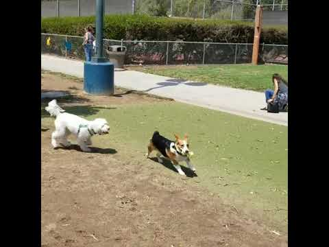 costa mesa dog park