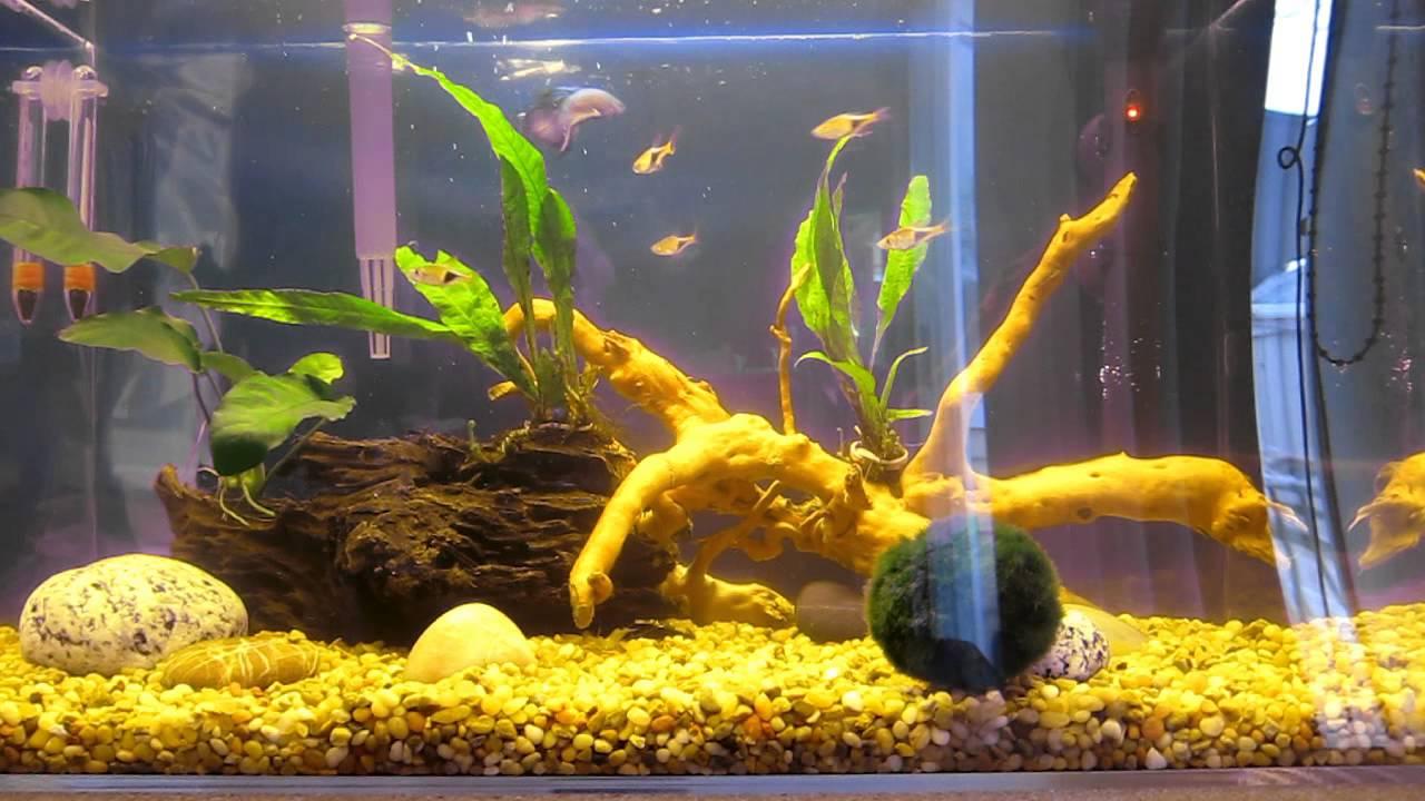 10 gallon planted betta tank