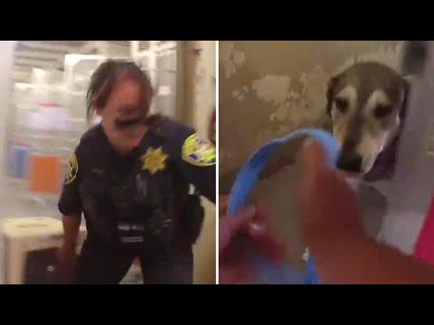 Dogs Are Frantically Rescued From Shelter Evacuated In California Wildfire