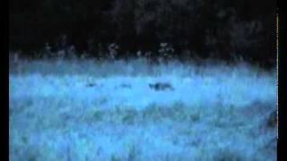 Охота на кабана. Видео 5