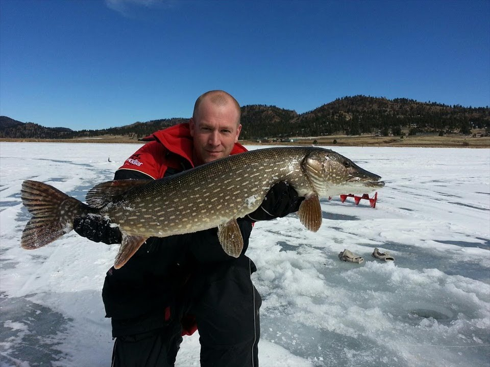Big colorado northern pike and fat rainbow trout youtube for Pike fishing colorado