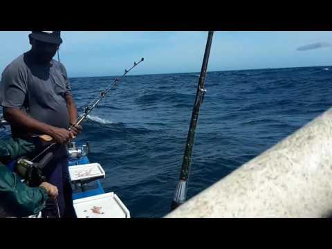Durban off shore Mahi-Mahi Game Fish