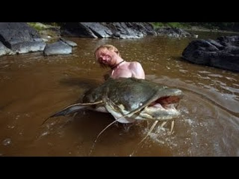 Hooked - Giant Goonch Devil Catfish