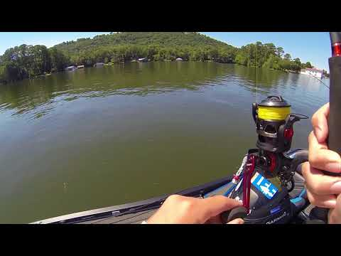 Lake Guntersville Ledge Fishing With MATT LEE