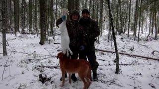 Охота на зайца с гончими собаками