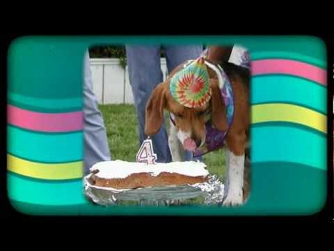 Dog Parties Atlanta GA Call 404 879 1600