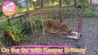 GoPro: Feeding Big Cats at Big Cat Rescue