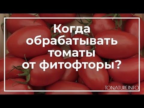 Когда обрабатывать томаты от фитофторы?   toNature.Info