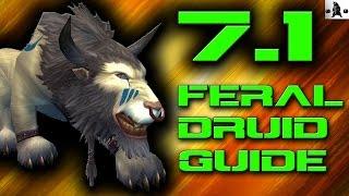 FERAL DRUID PvP GUIDE | WoW Legion (7.1)
