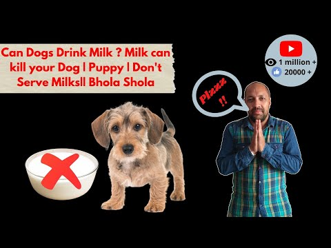 Pet Care - Don't Serve Milk For Dog - Bhola Shola