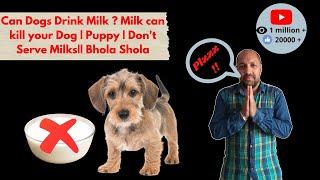 Pet Care - Don't Serve Milk For Dog - Bhola Shola thumbnail