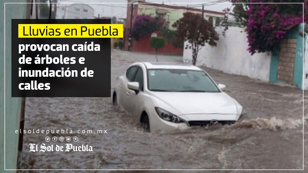 Lluvia provoca caída de árboles e inundación de calles