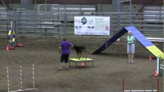 Rottweiler Agility - Gracie Gets Her Pax Title !!