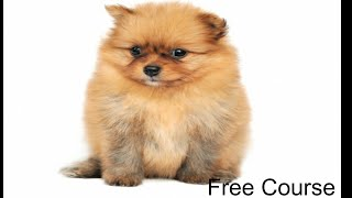 **WOW** Potty Training Chi Puppies - Free course on Potty Training Chi Puppies