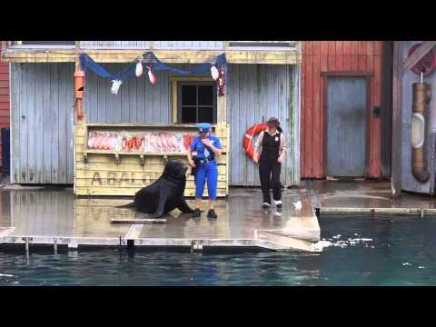 Seaworld Fish Detectives
