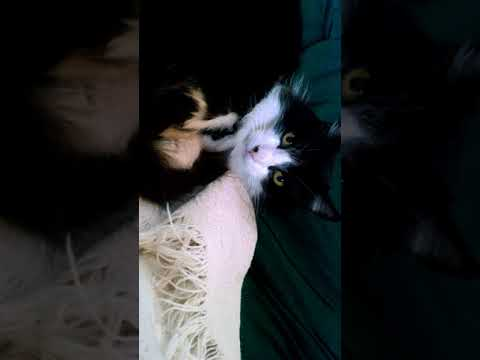 Cat documentary