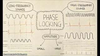 Phase-locking in auditory nerves