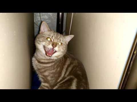 Кот говорит отстань ))