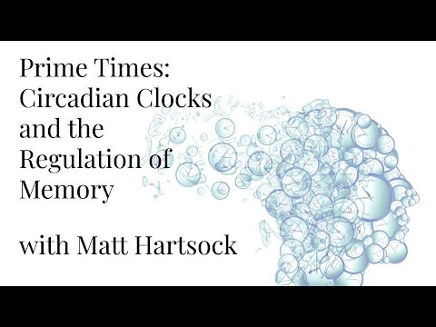 Prime Times: Circadian Clocks and the Regulation of Memory