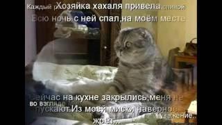 Эмоции котов